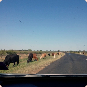 roadcows